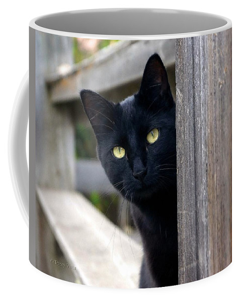 Cat Coffee Mug featuring the photograph Bright Eyed Kitty by Tracey Vivar