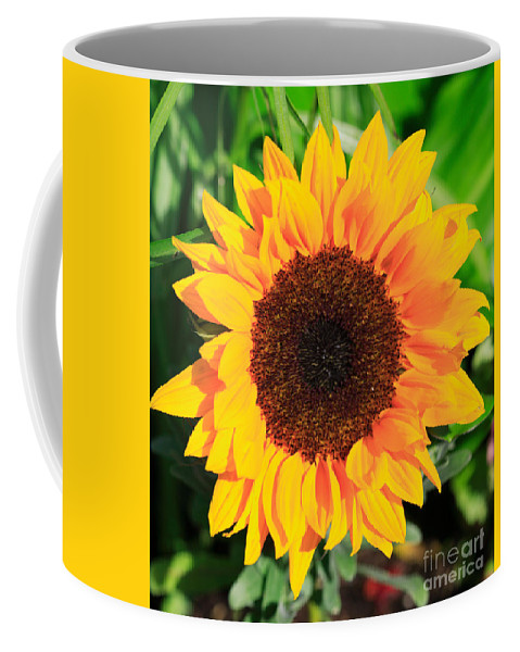 Aster Coffee Mug featuring the photograph Bright Sunflower by Deborah Benbrook