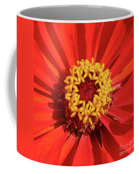 Zinnia Coffee Mug featuring the photograph Bright Zinnia by Carol Groenen
