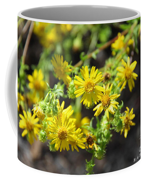Yellow Flowers Coffee Mug featuring the photograph Brighter Than Sunshine by Barbara Bowen