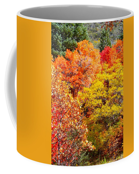 Autumn Coffee Mug featuring the photograph Brillant Fall by Cordelia Ford