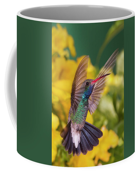 Hummingbird Coffee Mug featuring the photograph Broad-bill Pose by Janet Fikar