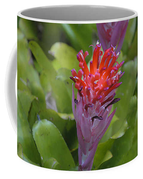 Bromeliad Coffee Mug featuring the photograph Bromeliad Flower by Kenneth Albin