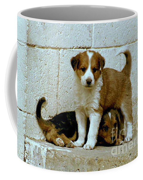 Puppies Coffee Mug featuring the photograph Brothers by Kathy McClure