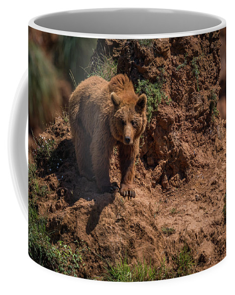 Cabarceno Coffee Mug featuring the photograph Brown Bear Watches From Steep Rocky Outcrop by Ndp