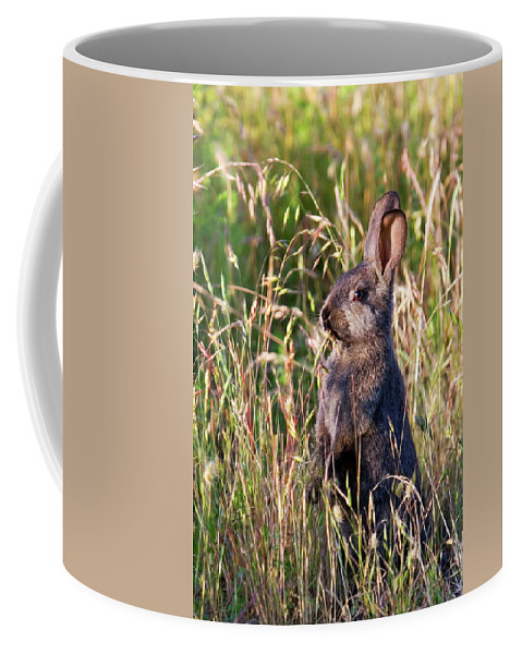 Rabbit Coffee Mug featuring the photograph Brown Bunny by Randall Ingalls