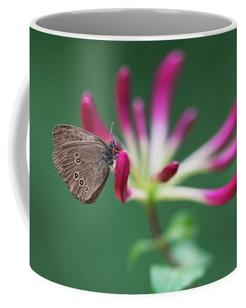 Lonicera Coffee Mug featuring the photograph Brown Butterfly Resting On The Pink Plant by Jaroslaw Blaminsky