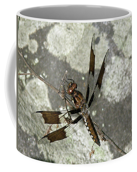 Dragonfly Coffee Mug featuring the photograph Brown Dragonfly by Mother Nature