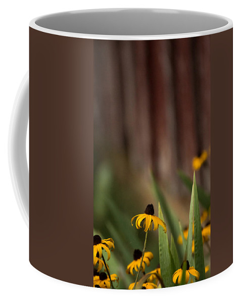Brown Eyed Susan Coffee Mug featuring the photograph Brown Eed Susans By Red Bard by Photographic Arts And Design Studio