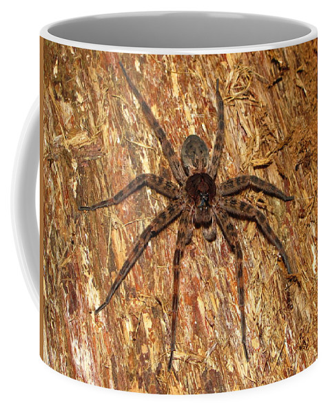 Maryland Brown Fishing Spider Images Spiders Of Maryland Images Brown Fishing Spider Prints Big Brown Spider Images Brown Fishing Spider Photograph Pictures Giant Brown Spider Hunting Spider Images Entomology Brown Arachnid Images Nature Forest Ecosystem Biodiversity Life Preditor Coffee Mug featuring the photograph Brown Fishing Spider by Joshua Bales