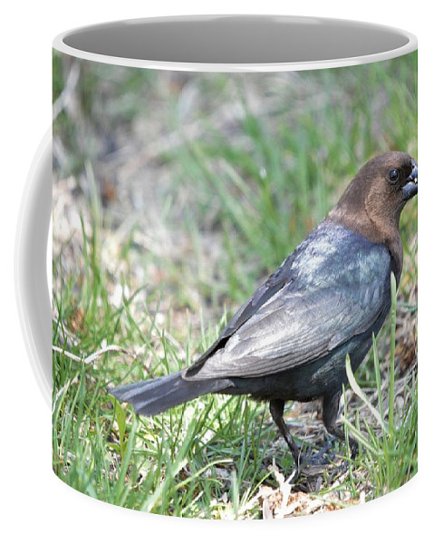 Animal Coffee Mug featuring the photograph Brown-headed Cowbird 2 by Bonfire Photography