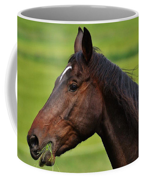 Horse Coffee Mug featuring the photograph Brown Horse by FL collection