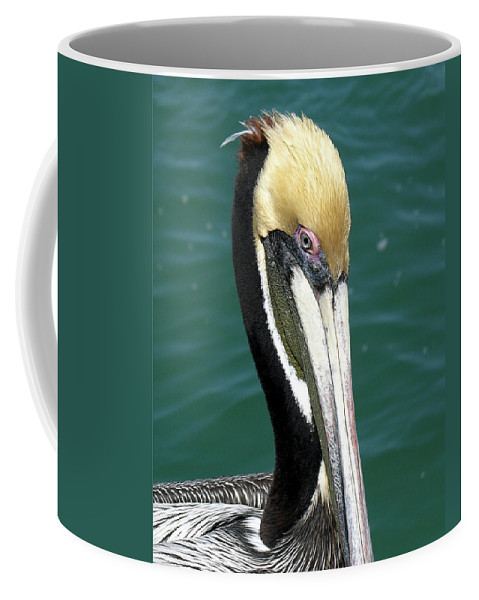 Pelecanus; Occidentalis; American; Brown; Pelican; Bird; Sea; Seabird; Ocean; Space; Coast; Cape; Ca Coffee Mug featuring the photograph Brown Pelican by Allan Hughes