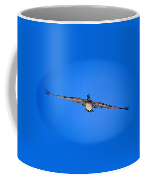 Brown Pelican Coffee Mug featuring the photograph Brown Pelican Flying by John Harmon