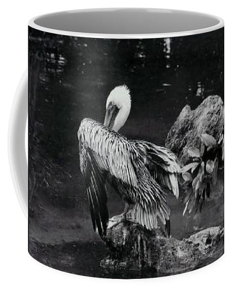 Brown Pelican Coffee Mug featuring the photograph Brown Pelican by Melanie Neer