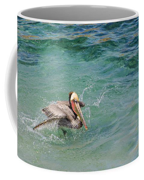 Brown Pelican Coffee Mug featuring the photograph Brown Pelican by Susan McMenamin