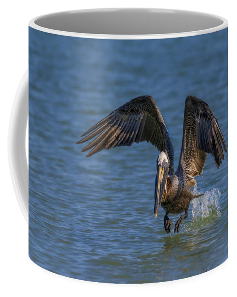 Pelican Coffee Mug featuring the photograph Brown Pelican Taking Off by Susan Candelario