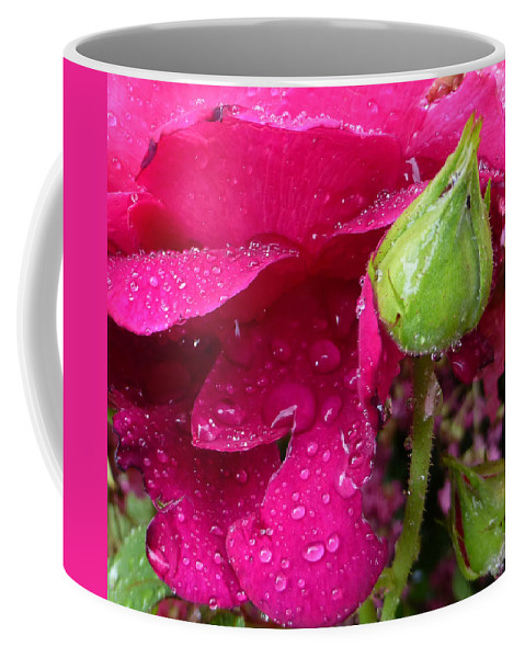 Water Coffee Mug featuring the photograph Buds And Drops by Claudia Goodell