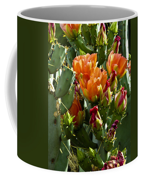 Arizona Coffee Mug featuring the photograph Buds N Blossoms by Kathy McClure