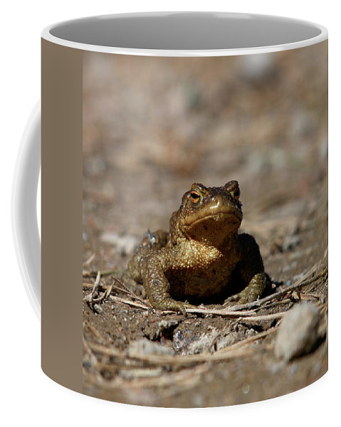 Lehtokukka Coffee Mug featuring the photograph Bufo Bufo by Jouko Lehto