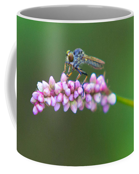 Insects Coffee Mug featuring the photograph Bug Eyed by Frank Pietlock