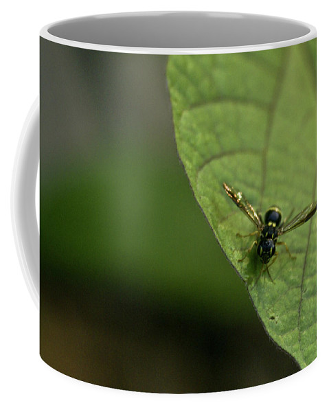 Bugeyed Coffee Mug featuring the photograph Bugeyed Fly by Douglas Barnett