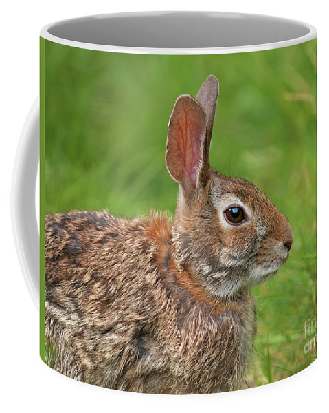Nature Coffee Mug featuring the photograph Bugs Bunny.. by Nina Stavlund