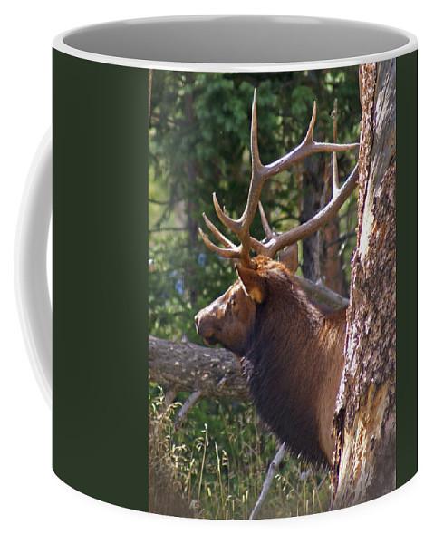 Elk Coffee Mug featuring the photograph Bull Elk 2 by Heather Coen