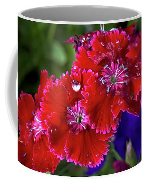 Dianthus Coffee Mug featuring the photograph Burgandy Red Dianthus by Phyllis Denton