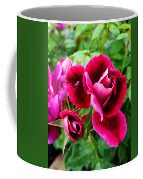 Burgundy Rose And Rose Bud Coffee Mug featuring the photograph Burgundy Rose And Rose Bud by Cynthia Woods