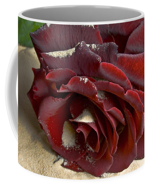 Flower Coffee Mug featuring the photograph Burgundy Rose by Svetlana Sewell