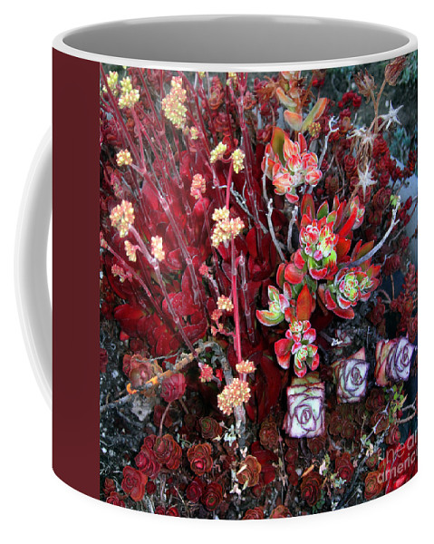 Succulent Coffee Mug featuring the photograph Burgundy Succulents. Multi Color Beauty by Sofia Metal Queen