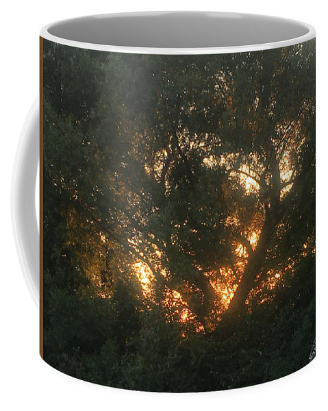 Burning Bush Coffee Mug featuring the photograph Burning Bush by Amy Lionheart