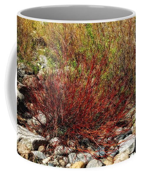 Willow Bush Coffee Mug featuring the photograph Burning Bush by Donna Blackhall