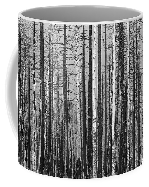 Burnt Coffee Mug featuring the photograph Burnt Forest by James BO Insogna
