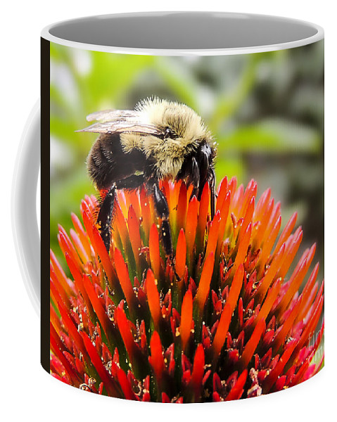 Bee Coffee Mug featuring the photograph Busy As A Bee by Keith Ptak