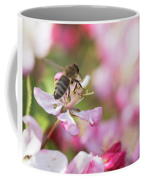 Bee Coffee Mug featuring the photograph Busy Bee On A Crabapple Tree by Catherine Avilez