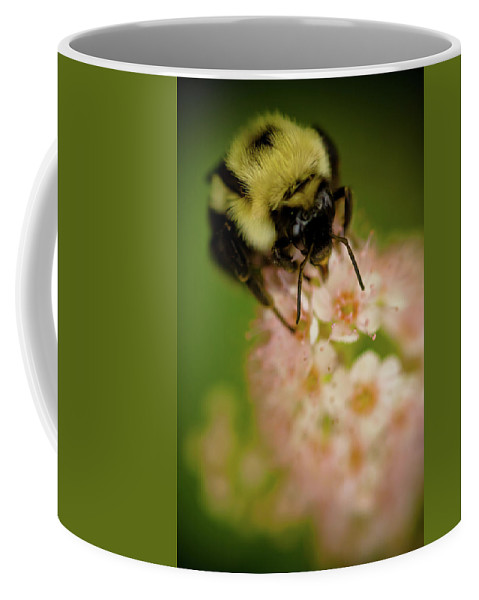 Bee Coffee Mug featuring the photograph Busy Bee by Sebastian Musial