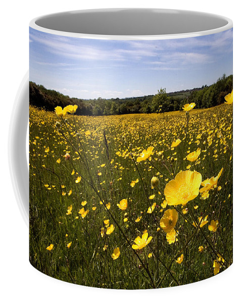 Buttercups Coffee Mug featuring the photograph Buttercup Field by Bob Kemp