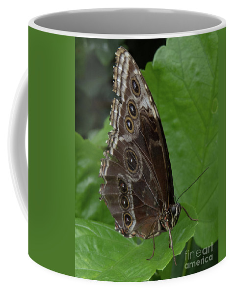 Butterfly Coffee Mug featuring the photograph Butterfly 5 by Christy Garavetto