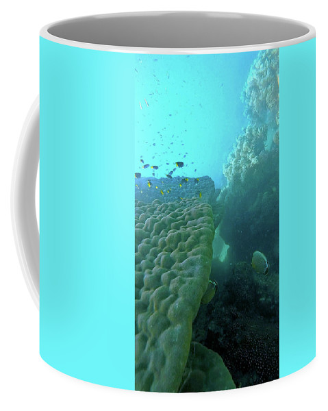 Great Barrier Reef Coffee Mug featuring the photograph Butterfly Fish by Debbie Cundy