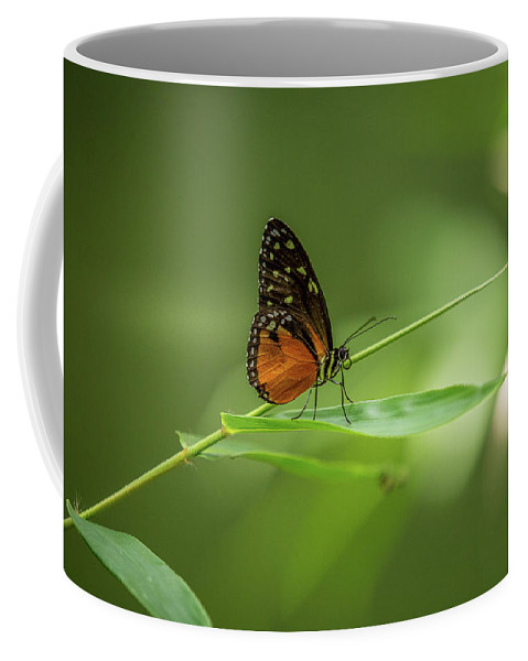 Butterfly Coffee Mug featuring the photograph Golden Helicon Butterfly by Jimmy Tran