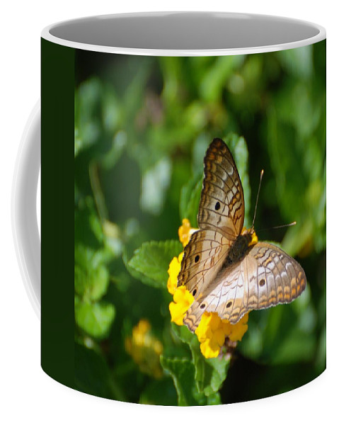 Butterfly Coffee Mug featuring the photograph Butterfly Land by Rob Hans