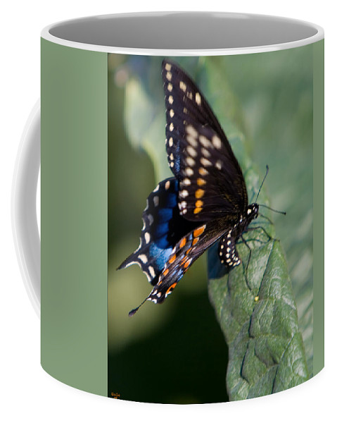 Butterfly Coffee Mug featuring the photograph Butterfly Laying Eggs by Chris Lord