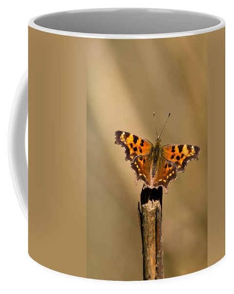 Butterfly Coffee Mug featuring the photograph Butterfly On A Stick by Randall Ingalls