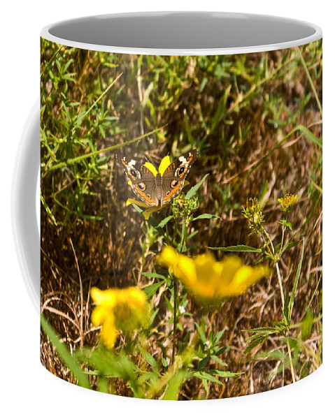 Butterfly Coffee Mug featuring the photograph Butterfly On Flower by Douglas Barnett