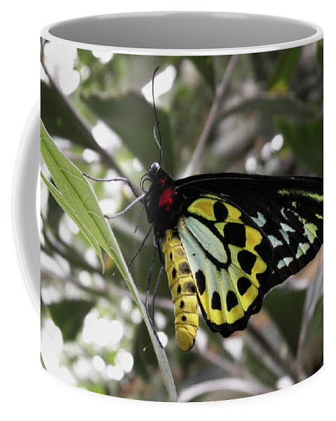 Butterfly Coffee Mug featuring the photograph Butterfly One by Nancy Griswold