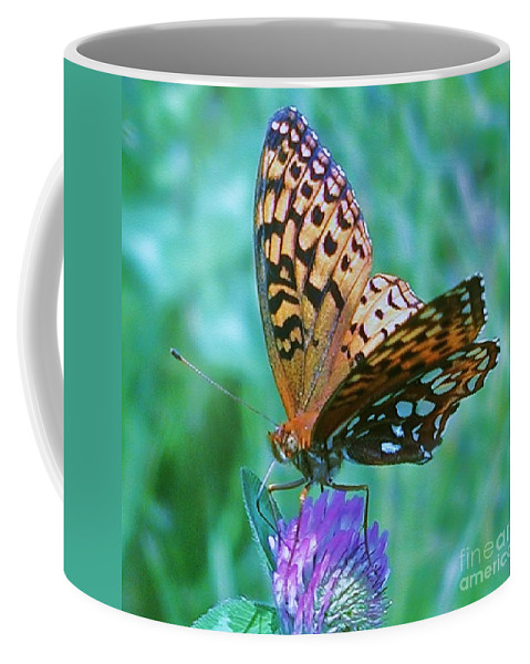 Butterfly Coffee Mug featuring the photograph Butterfly Stare by Emily Michaud