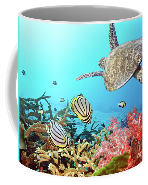 Butterflyfish Coffee Mug featuring the photograph Butterflyfishes And Turtle by MotHaiBaPhoto Prints