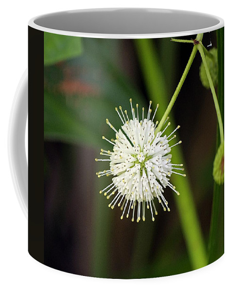 Nature Coffee Mug featuring the photograph Button Bush by Kenneth Albin